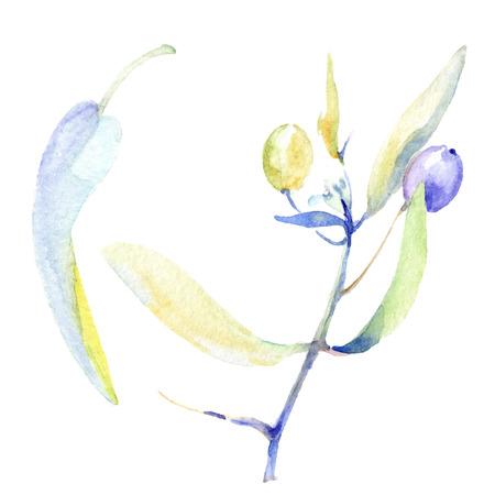 Olive watercolor background illustration set. Watercolour drawing fashion aquarelle isolated. Green leaf. Leaf plant botanical garden floral foliage. Isolated olive illustration element. Stock Photo