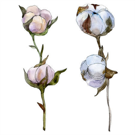 Cotton floral botanical flower. Wild spring leaf wildflower isolated. Watercolor background illustration set. Watercolour drawing fashion aquarelle isolated. Isolated cotton illustration element. Imagens