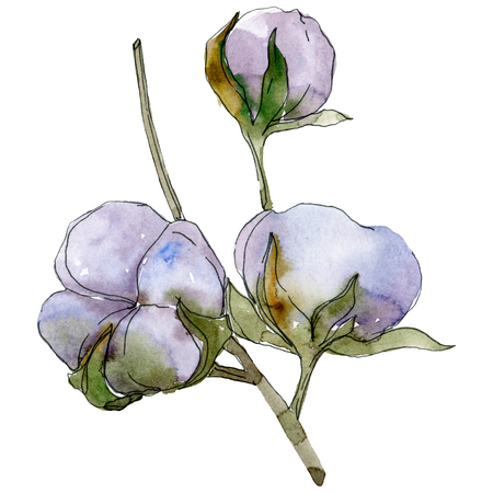 Cotton floral botanical flower. Wild spring leaf wildflower isolated. Watercolor background illustration set. Watercolour drawing fashion aquarelle isolated. Stok Fotoğraf