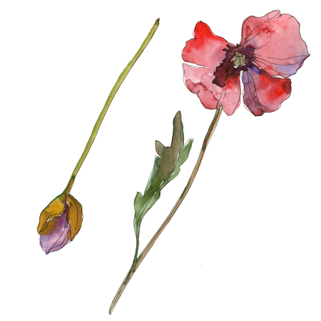 Purple red poppy floral botanical flower. Wild spring leaf isolated. Watercolor background illustration set. Watercolour drawing fashion aquarelle isolated. Isolated poppies illustration element. Reklamní fotografie