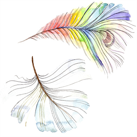 Colorful bird feather from wing isolated. Aquarelle feather for background, texture. Watercolor background illustration set. Watercolour drawing fashion aquarelle isolated.