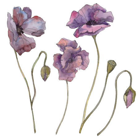 Purple poppy floral botanical flower. Wild spring leaf isolated. Watercolor background illustration set. Watercolour drawing fashion aquarelle isolated. Isolated poppies illustration element. Stockfoto - 117500539