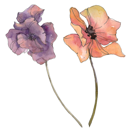 Red and purple poppy floral botanical flower. Wild spring leaf isolated. Watercolor background illustration set. Watercolour drawing fashion aquarelle isolated. Isolated poppies illustration element.