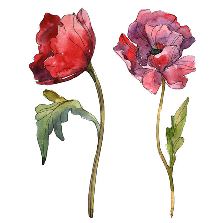 Red poppy floral botanical flower. Wild spring leaf wildflower isolated. Watercolor background illustration set. Watercolour drawing fashion aquarelle isolated. Isolated poppy illustration element.
