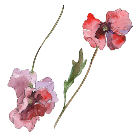 Purple red poppy floral botanical flower. Wild spring leaf isolated. Watercolor background illustration set. Watercolour drawing fashion aquarelle isolated. Isolated poppies illustration element. Stock Photo