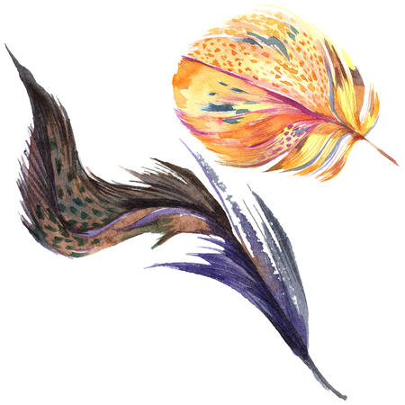 Colorful bird feather from wing isolated. Aquarelle feather for background. Watercolor illustration set. Watercolour drawing fashion aquarelle isolated. Isolated feather illustration element.
