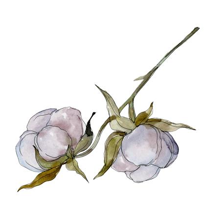 White cotton floral botanical flower. Wild spring leaf wildflower. Watercolor background illustration set. Watercolour drawing fashion aquarelle isolated. Isolated cotton illustration element.