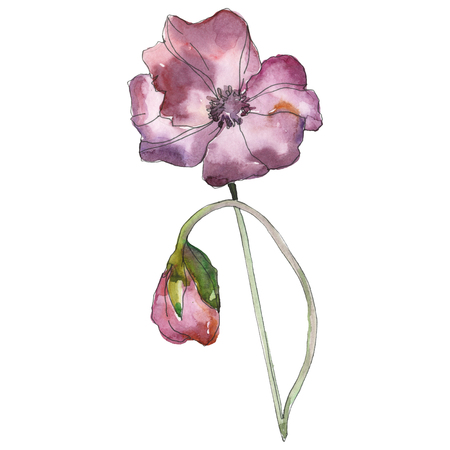 Purple red poppy floral botanical flower. Wild spring leaf isolated. Watercolor background illustration set. Watercolour drawing fashion aquarelle isolated. Isolated poppies illustration element. Zdjęcie Seryjne