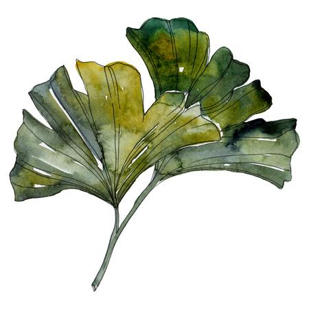 Yellow green ginkgo biloba leaf. Leaf plant botanical garden floral foliage. Watercolor background illustration set. Watercolour drawing fashion aquarelle. Isolated ginkgo illustration element.