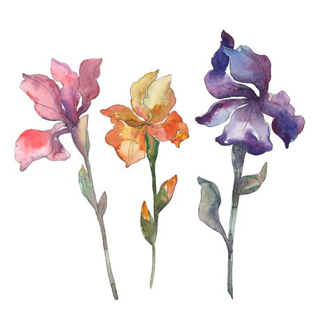Red, orange and purple irises. Floral botanical flower. Wild spring leaf isolated. Watercolor background illustration set. Watercolour drawing fashion aquarelle. Isolated iris illustration element.