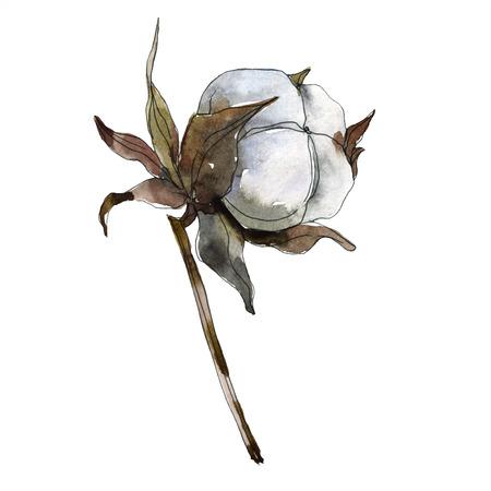 Cotton floral botanical flower. Watercolor background illustration set. Watercolour drawing fashion aquarelle isolated. Isolated cotton illustration element. Banco de Imagens