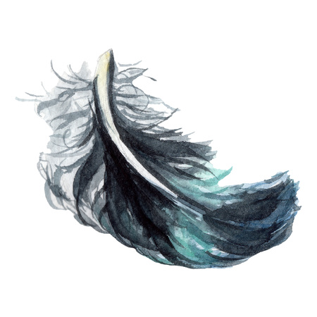Blue black bird feather from wing isolated. Watercolor background illustration set. Watercolour drawing fashion aquarelle. Isolated feathers illustration element. Фото со стока