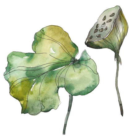 Lotus foral botanical flower. Wild spring leaf wildflower isolated. Watercolor background illustration set. Watercolour drawing fashion aquarelle. Isolated lotus illustration element.