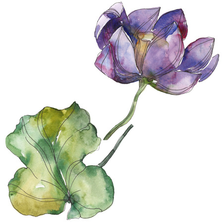 Purple lotus foral botanical flower. Wild spring leaf wildflower isolated. Watercolor background illustration set. Watercolour drawing fashion aquarelle. Isolated lotus illustration element.