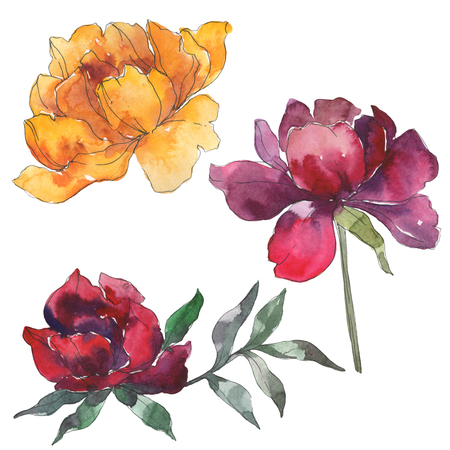 Yellow and burgundy peony floral botanical flower. Wild spring leaf wildflower isolated. Watercolor background set. Watercolour drawing fashion aquarelle. Isolated peony illustration element.