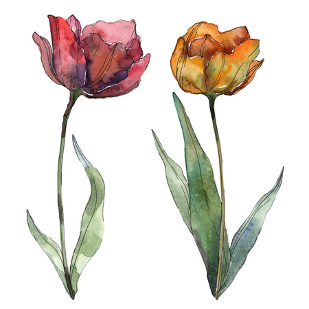 Red and burgundy poppy floral botanical flower. Wild spring leaf wildflower. Watercolor background illustration set. Watercolour drawing fashion aquarelle. Isolated poppy illustration element.