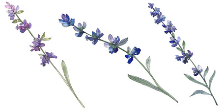 Purple lavender floral botanical flower. Wild spring leaf wildflower isolated. Watercolor background illustration set. Watercolour drawing fashion aquarell. Isolated lavender illustration element. Banque d'images - 117582600
