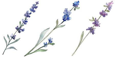 Purple lavender floral botanical flower. Wild spring leaf wildflower isolated. Watercolor background illustration set. Watercolour drawing fashion aquarell. Isolated lavender illustration element. Banque d'images - 117582606