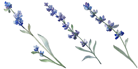 Purple lavender floral botanical flower. Wild spring leaf wildflower isolated. Watercolor background illustration set. Watercolour drawing fashion aquarell. Isolated lavender illustration element. Banque d'images - 117582609