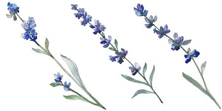 Purple lavender floral botanical flower. Wild spring leaf wildflower isolated. Watercolor background illustration set. Watercolour drawing fashion aquarell. Isolated lavender illustration element. Reklamní fotografie