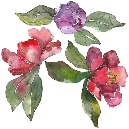 Red and purple camelia floral botanical flower. Wild spring leaf wildflower. Watercolor background illustration set. Watercolour drawing fashion aquarelle. Isolated camelia illustration element. Stock Photo