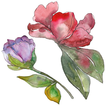 Red and purple camelia floral botanical flower. Wild spring leaf wildflower. Watercolor background illustration set. Watercolour drawing fashion aquarelle. Isolated camelia illustration element. Reklamní fotografie