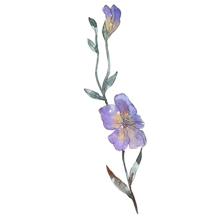 Purple flax floral botanical flower. Wild spring leaf wildflower isolated. Watercolor background illustration set. Watercolour drawing fashion aquarelle. Isolated flax illustration element.