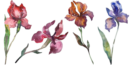Red and purple irises. Floral botanical flower. Wild spring leaf wildflower isolated. Watercolor background illustration set. Watercolour drawing fashion aquarelle. Isolated iris illustration element. 写真素材