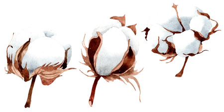 Cotton floral botanical flower. Wild spring leaf wildflower isolated. Watercolor background illustration set. Watercolour drawing fashion aquarelle isolated. Isolated cootton illustration element. Reklamní fotografie
