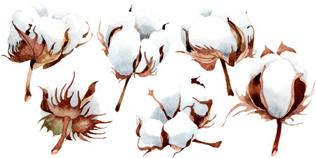 Cotton floral botanical flower. Wild spring leaf wildflower isolated. Watercolor background illustration set. Watercolour drawing fashion aquarelle isolated. Isolated cootton illustration element. Banco de Imagens
