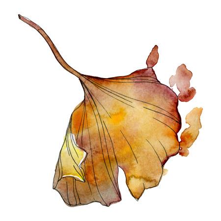 Ginkgo biloba leaf. Leaf plant botanical garden floral foliage. Watercolor background illustration set. Watercolour drawing fashion aquarelle isolated. Isolated ginkgo illustration element. Stock fotó