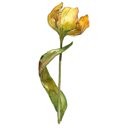 Yellow tulip floral botanical flower. Wild spring leaf wildflower. Isolated tulip illustration element. Watercolor background illustration set. Watercolour drawing fashion aquarelle isolated. Imagens