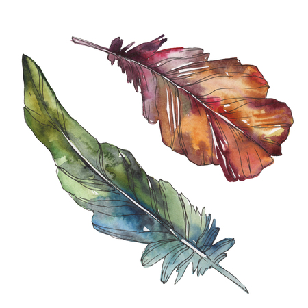 Bird feather from wing isolated. Watercolor background illustration set. Watercolour drawing fashion aquarelle isolated. Isolated feathers illustration element.