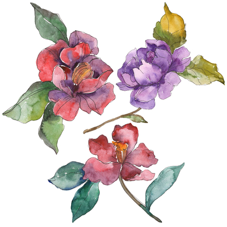 Red purple camelia floral botanical flower. Wild spring leaf wildflower isolated. Watercolor background illustration set. Watercolour drawing fashion aquarelle. Isolated camelia illustration element.