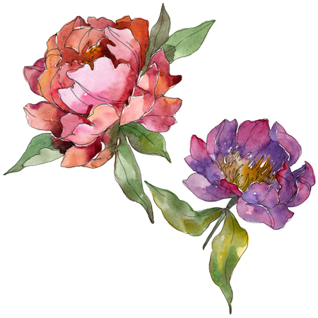 Purple peony floral botanical flower. Wild spring leaf wildflower isolated. Watercolor background illustration set. Watercolour drawing fashion aquarelle. Isolated peonies illustration element. Stok Fotoğraf