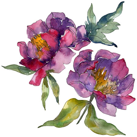 Purple peony floral botanical flower. Wild spring leaf wildflower isolated. Watercolor background illustration set. Watercolour drawing fashion aquarelle. Isolated peonies illustration element. Stock Photo