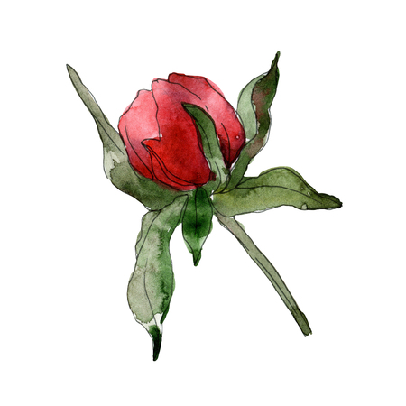 Red peony floral botanical flower. Wild spring leaf wildflower isolated. Watercolor background illustration set. Watercolour drawing fashion aquarelle isolated. Isolated peonies illustration element. Imagens
