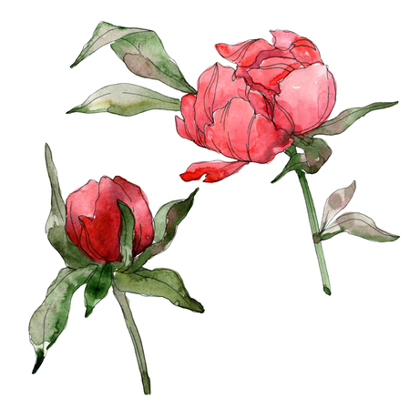 Red peony floral botanical flower. Wild spring leaf wildflower isolated. Watercolor background illustration set. Watercolour drawing fashion aquarelle isolated. Isolated peonies illustration element. Stok Fotoğraf