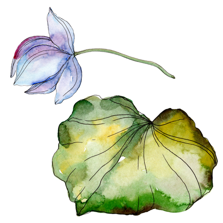 Blue purple floral botanical flower. Wild spring leaf wildflower isolated. Watercolor background illustration set. Watercolour drawing fashion aquarelle isolated. Isolated lotus illustration element. Reklamní fotografie