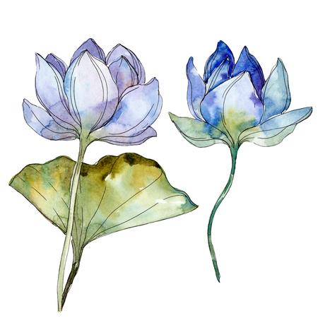 Blauwe paarse bloemen botanische bloem. Wild voorjaar blad wildflower geïsoleerd. Aquarel achtergrond afbeelding instellen. Aquarel tekenen mode aquarelle geïsoleerd. Geïsoleerd lotus illustratie-element.