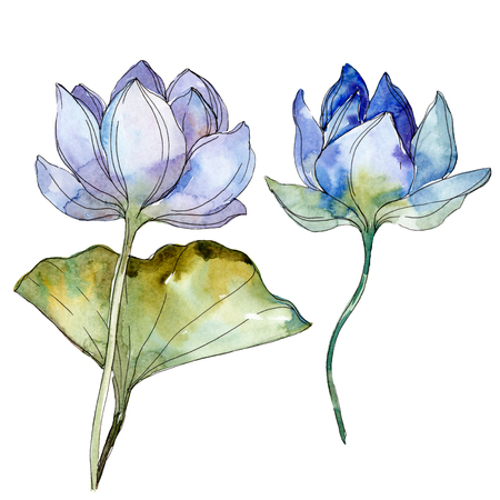 Blue purple floral botanical flower. Wild spring leaf wildflower isolated. Watercolor background illustration set. Watercolour drawing fashion aquarelle isolated. Isolated lotus illustration element. Stok Fotoğraf