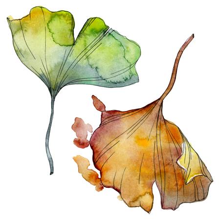 Ginkgo biloba leaf. Leaf plant botanical garden floral foliage. Watercolor background illustration set. Watercolour drawing fashion aquarelle isolated. Isolated ginkgo illustration element. Stok Fotoğraf