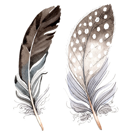 Bird feather from wing isolated. Watercolor background illustration set. Watercolour drawing fashion aquarelle. Isolated feather illustration element on white background. Foto de archivo - 117625663