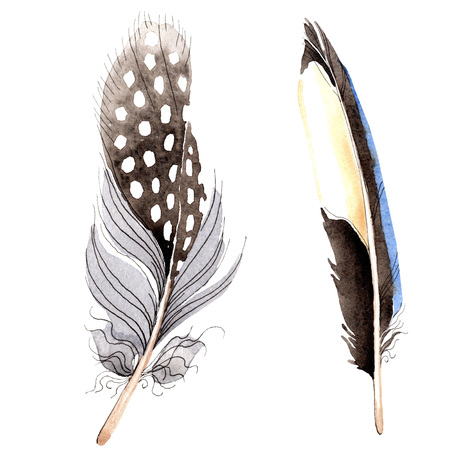 Bird feather from wing isolated. Watercolor background illustration set. Watercolour drawing fashion aquarelle. Isolated feather illustration element on white background.