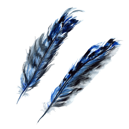 Blue black bird feather from wing isolated. Watercolor background illustration set. Watercolour drawing fashion aquarelle. Isolated feathers illustration element. Stock Photo