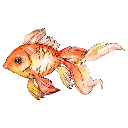 Watercolor aquatic underwater colorful tropical goldfish set. Red sea and exotic fishes inside. Background illustration set. Watercolour drawing fashion aquarelle. Isolated fish illustration element.