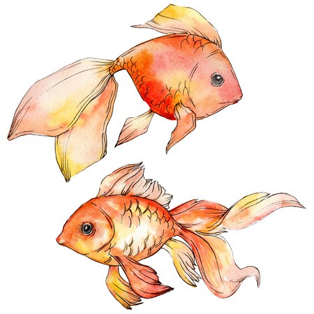 Watercolor aquatic underwater colorful tropical goldfish set. Red sea and exotic fishes inside. Background illustration set. Watercolour drawing fashion aquarelle. Isolated fish illustration element. Imagens - 117488853