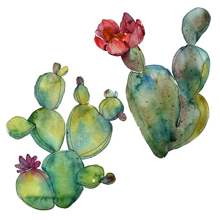 Green cactus floral botanical flower. Wild spring leaf wildflower isolated. Watercolor background illustration set. Watercolour drawing fashion aquarelle. Isolated cacti illustration element. Banco de Imagens