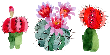 Green red cactus floral botanical flower. Wild spring leaf wildflower isolated. Watercolor background illustration set. Watercolour drawing fashion aquarelle. Isolated cacti illustration element.