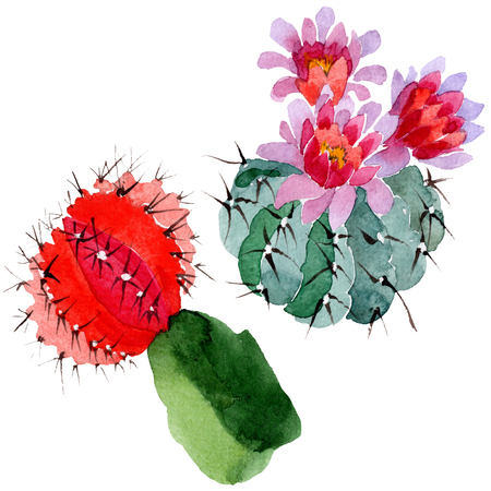 Green red cactus floral botanical flower. Wild spring leaf wildflower isolated. Watercolor background illustration set. Watercolour drawing fashion aquarelle. Isolated cacti illustration element. Stok Fotoğraf - 117489235